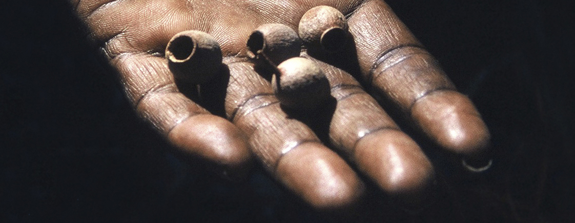 Aboriginal hand holding native seeds