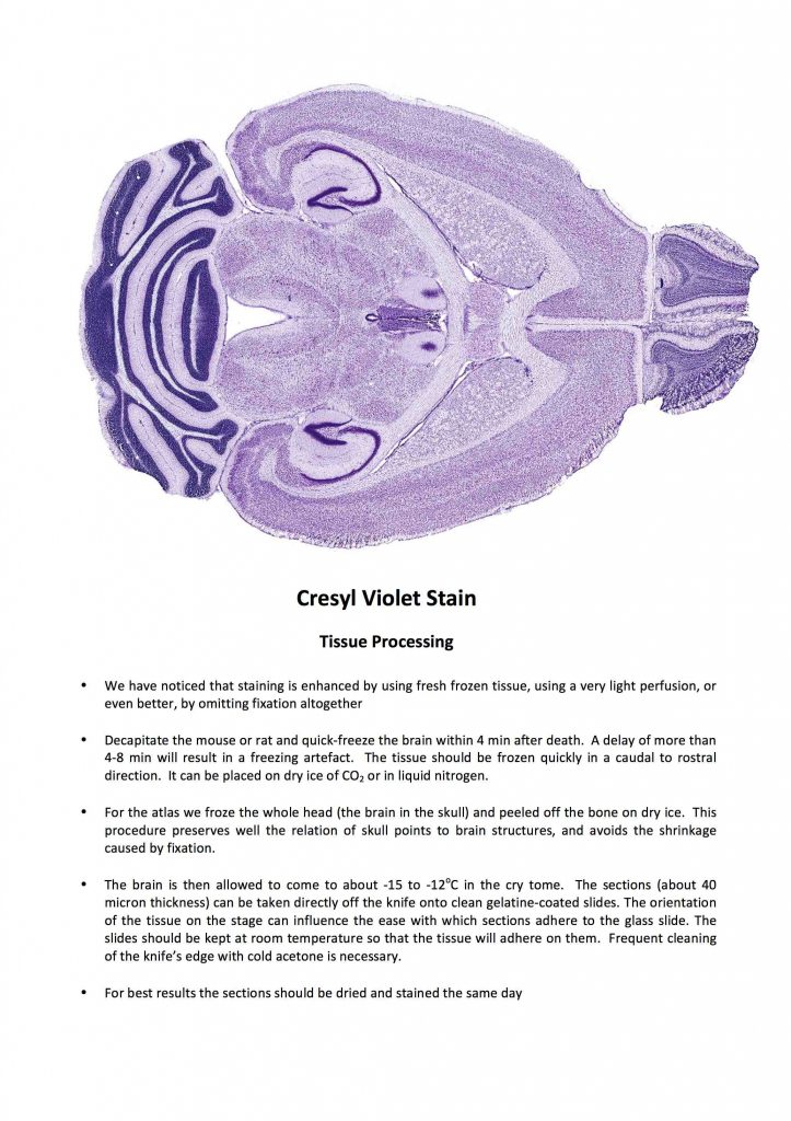 Cresyl Violet (Nissl) Stain Protocol