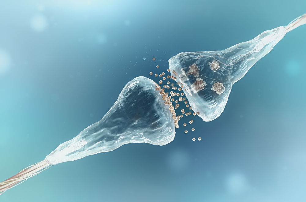 Synapses_shutterstock_377204860