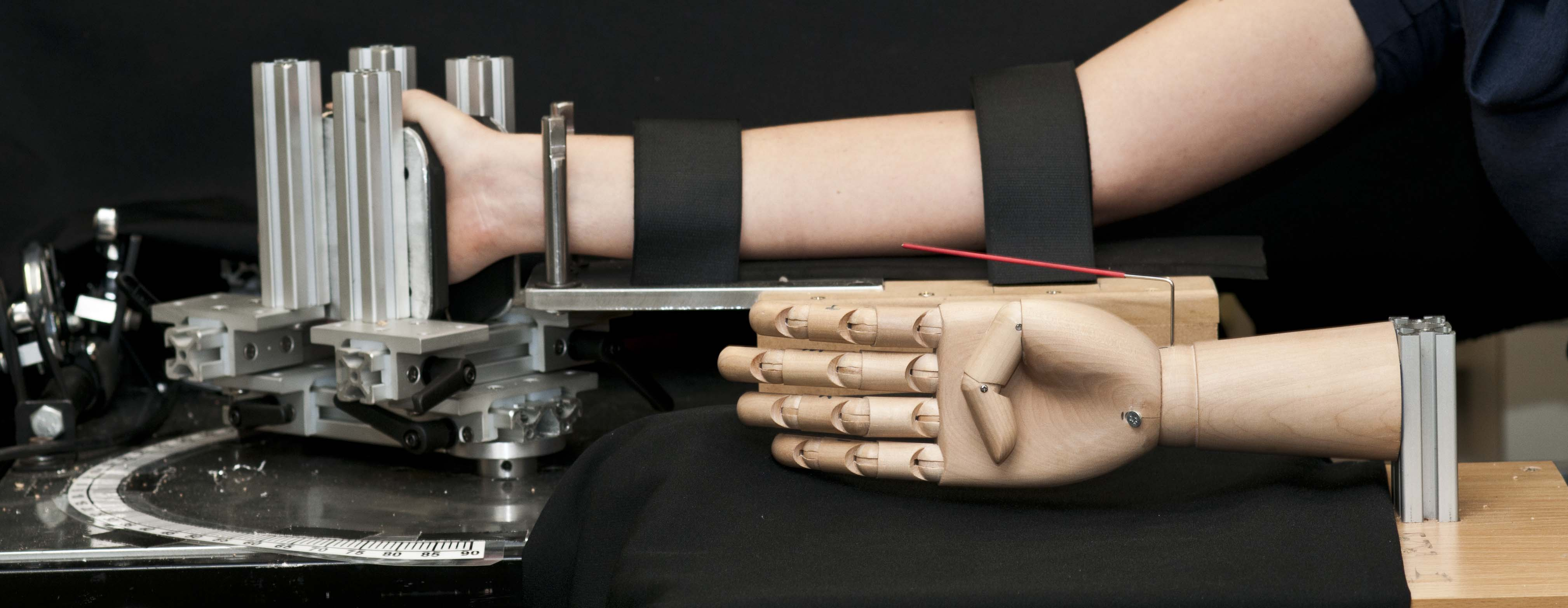 Wooden hand and participant arm involved in research about phantom limbs